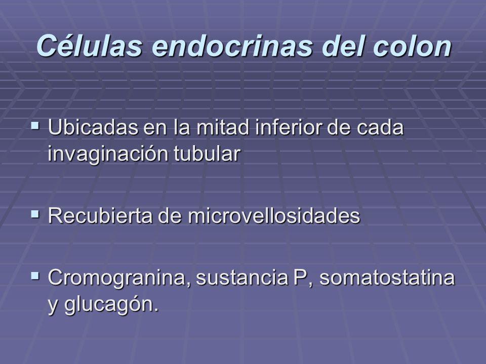 PANCREAS ENDOCRINO Órgano que secreta hormonas implicadas en la regulación de la glucosa de la sangre.