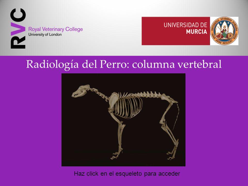 Radiología del Perro: columna vertebral Haz click en el esqueleto para acceder