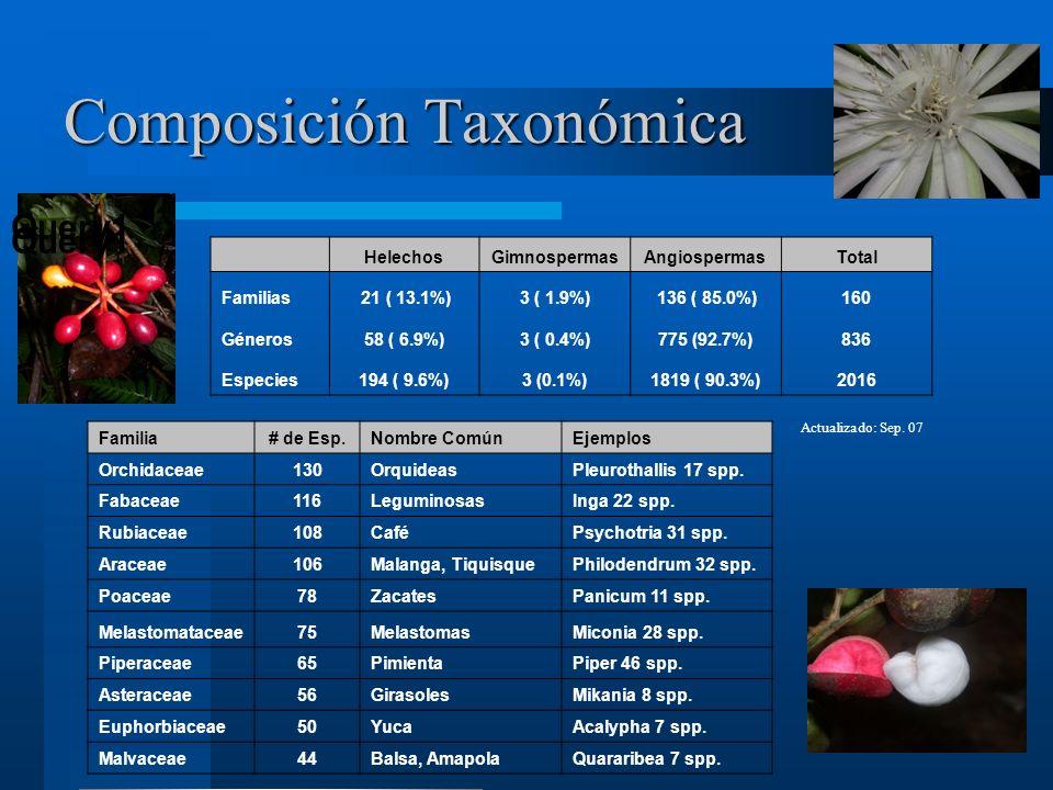 Composición Taxonómica HelechosGimnospermasAngiospermasTotal Familias 21 ( 13.1%)3 ( 1.9%) 136 ( 85.0%)160 Géneros58 ( 6.9%)3 ( 0.4%)775 (92.7%)836 Especies194 ( 9.6%)3 (0.1%)1819 ( 90.3%)2016 Actualizado: Sep.