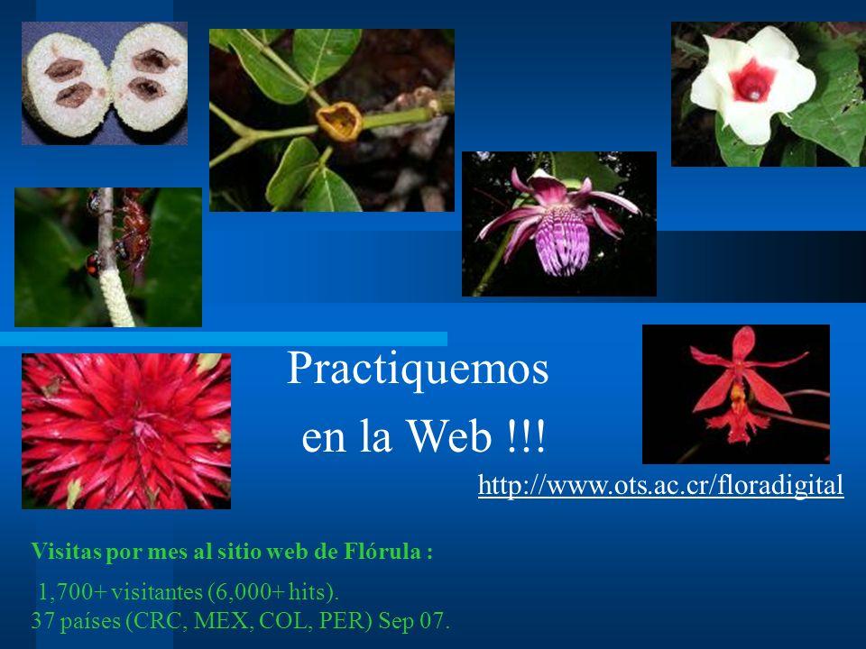 Practiquemos en la Web !!.