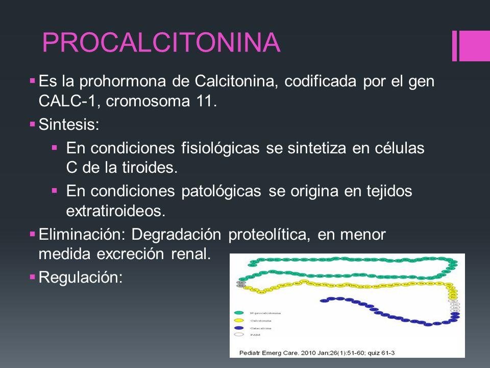 PROCALCITONINA Es la prohormona de Calcitonina, codificada por el gen CALC-1, cromosoma 11. Sintesis: En condiciones fisiológicas se sintetiza en célu