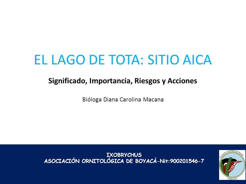IXOBRYCHUS ASOCIACIÓN ORNITOLÓGICA DE BOYACÁ-Nit:900201546-7 EL LAGO DE TOTA: SITIO AICA Significado, Importancia, Riesgos y Acciones Bióloga Diana Ca