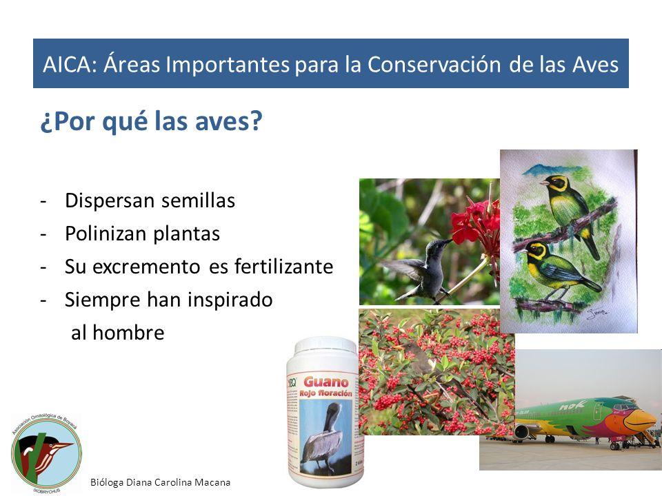 ¿Por qué las aves? -Dispersan semillas -Polinizan plantas -Su excremento es fertilizante -Siempre han inspirado al hombre AICA: Áreas Importantes para