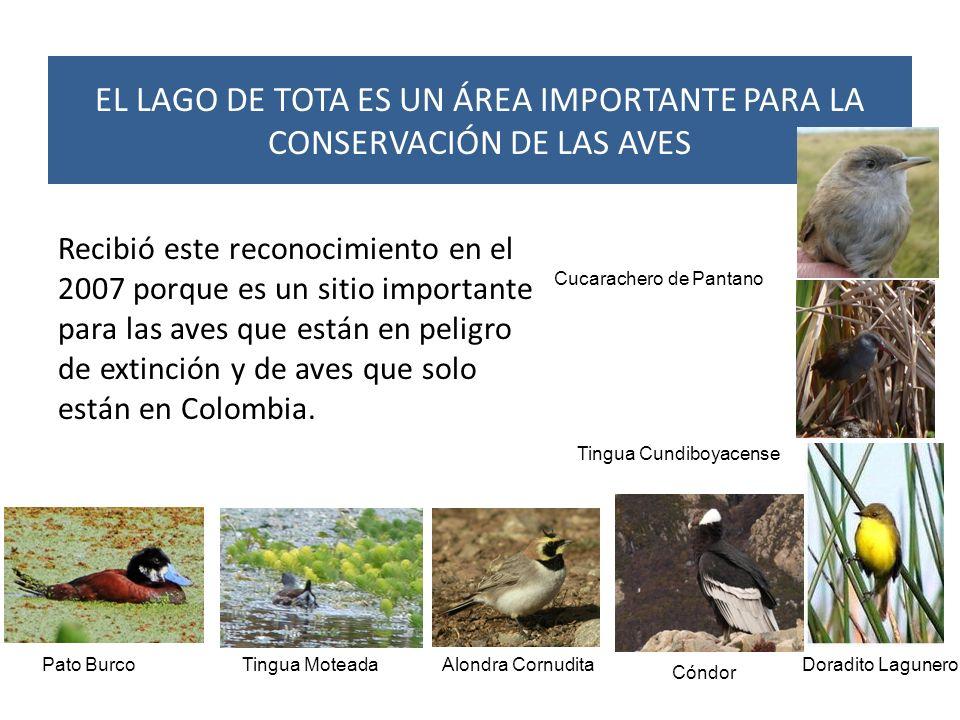 Recibió este reconocimiento en el 2007 porque es un sitio importante para las aves que están en peligro de extinción y de aves que solo están en Colom