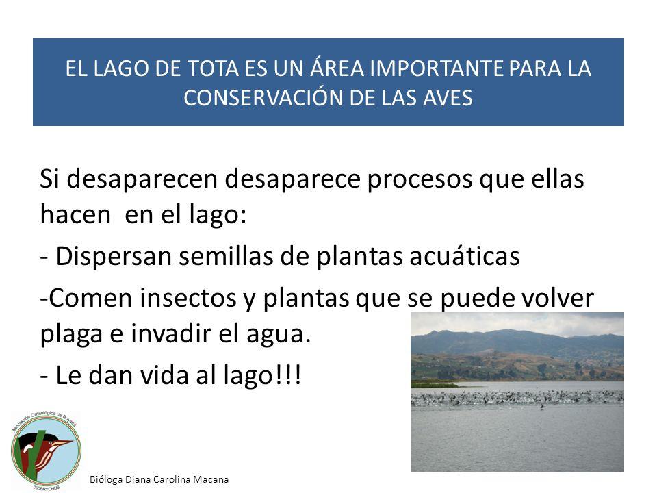Si desaparecen desaparece procesos que ellas hacen en el lago: - Dispersan semillas de plantas acuáticas -Comen insectos y plantas que se puede volver