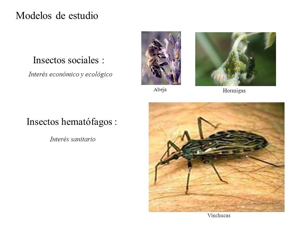 Modelos de estudio Insectos sociales : Insectos hematófagos : Interés económico y ecológico Abeja Hormigas Vinchucas Interés sanitario