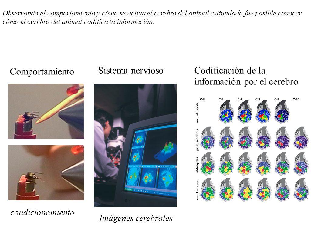 Comportamiento Codificación de la información por el cerebro Sistema nervioso Imágenes cerebrales condicionamiento Observando el comportamiento y cómo