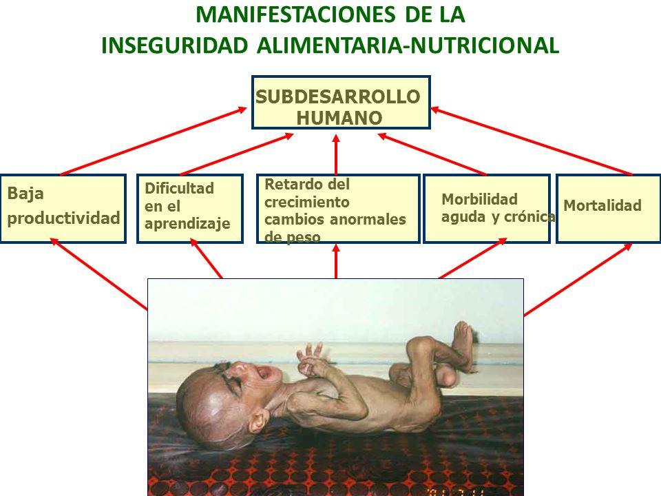 MANIFESTACIONES DE LA INSEGURIDAD ALIMENTARIA-NUTRICIONAL Baja productividad Dificultad en el aprendizaje Morbilidad aguda y crónica Mortalidad INSEGU