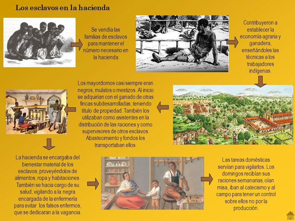 Contribuyeron a establecer la economía agraria y ganadera, enseñándoles las técnicas a los trabajadores indígenas.