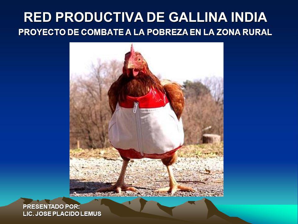 RED PRODUCTIVA DE GALLINA INDIA PROYECTO DE COMBATE A LA POBREZA EN LA ZONA RURAL PRESENTADO POR: LIC. JOSE PLACIDO LEMUS