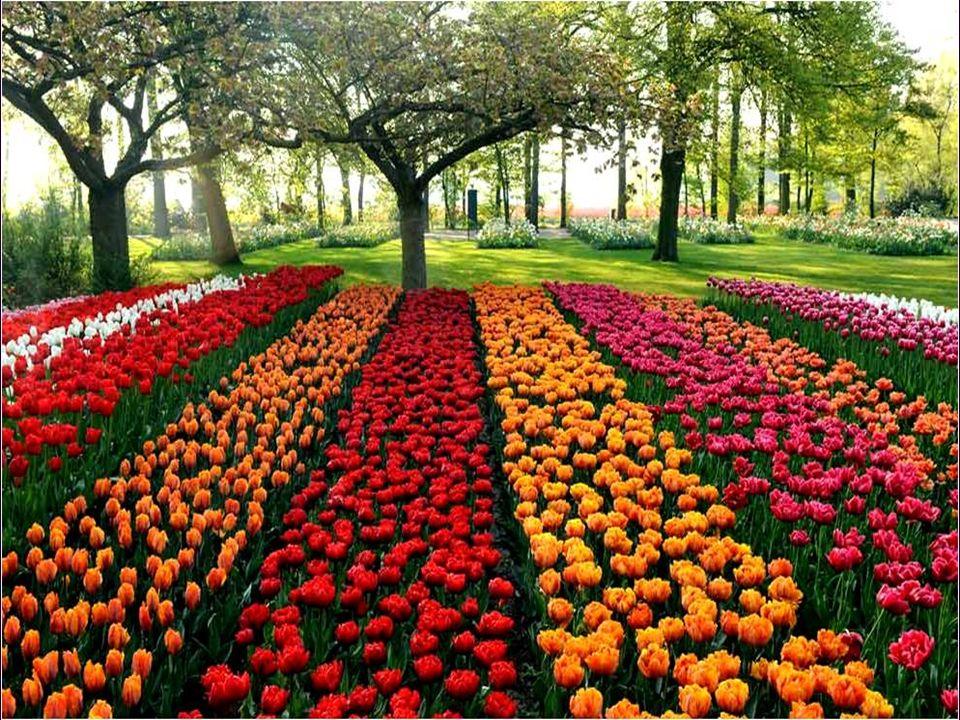 Otras veces, las flores simplemente no existían, ya que el catálogo sobre el que compraban eran dibujos de acuarelas con flores que muchas veces el artista había inventado al hacer el dibujo.