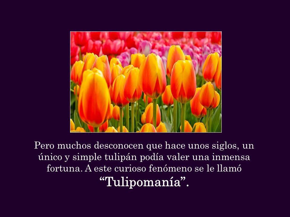 Pero muchos desconocen que hace unos siglos, un único y simple tulipán podía valer una inmensa fortuna.