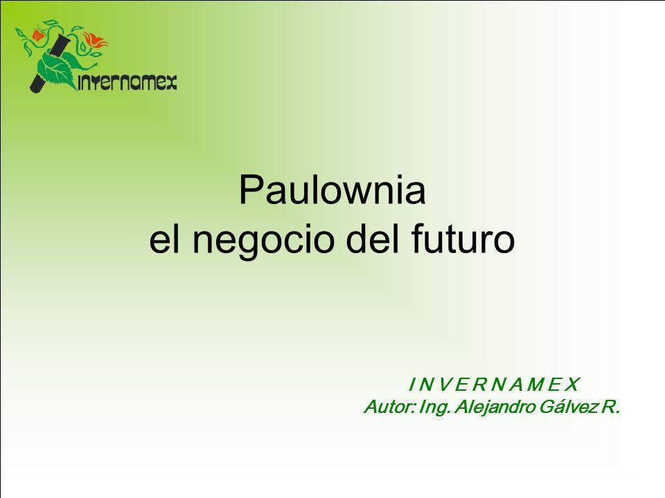 Paulownia el negocio del futuro I N V E R N A M E X Autor: Ing. Alejandro Gálvez R.