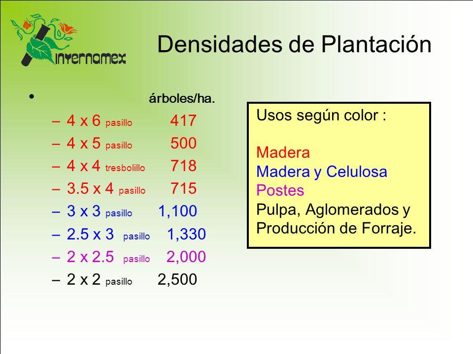 Densidades de Plantación árboles/ha. –4 x 6 pasillo 417 –4 x 5 pasillo 500 –4 x 4 tresbolillo 718 –3.5 x 4 pasillo 715 –3 x 3 pasillo 1,100 –2.5 x 3 p