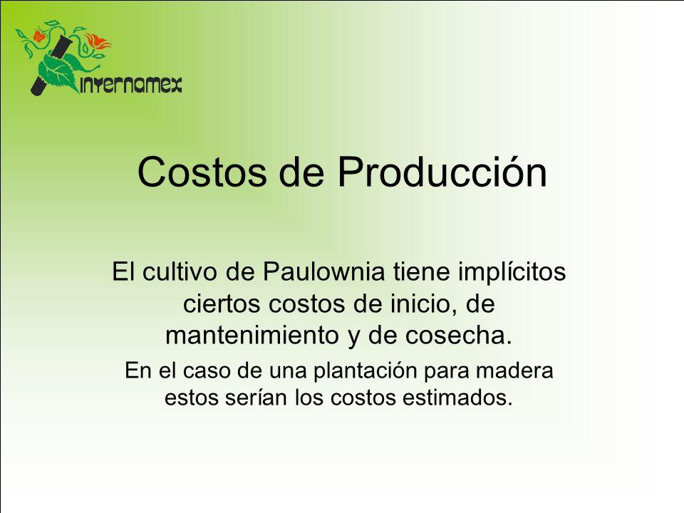 Costos de Producción El cultivo de Paulownia tiene implícitos ciertos costos de inicio, de mantenimiento y de cosecha. En el caso de una plantación pa