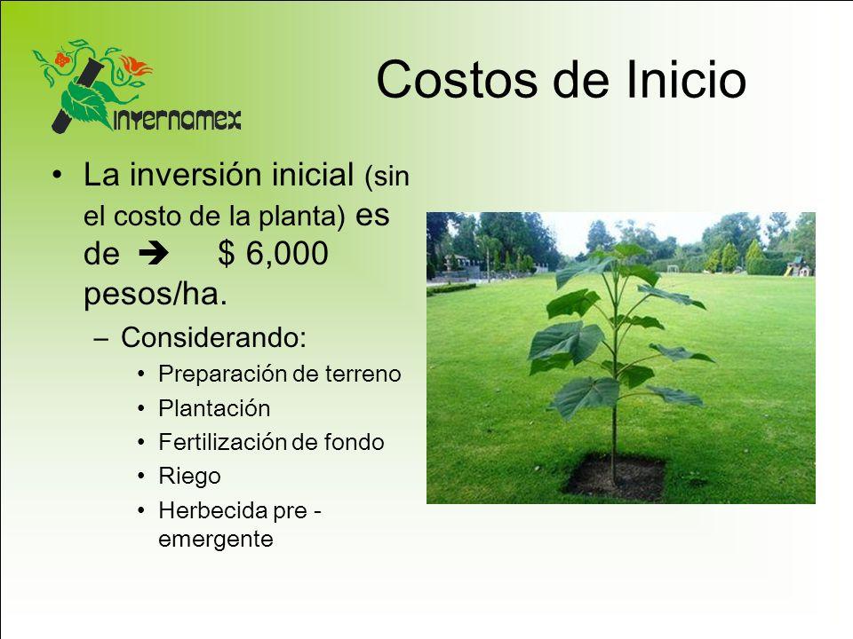 Costos de Inicio La inversión inicial (sin el costo de la planta) es de $ 6,000 pesos/ha. –Considerando: Preparación de terreno Plantación Fertilizaci