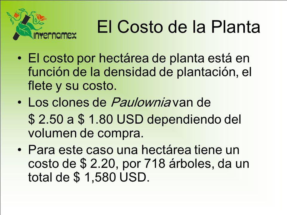 El Costo de la Planta El costo por hectárea de planta está en función de la densidad de plantación, el flete y su costo. Los clones de Paulownia van d