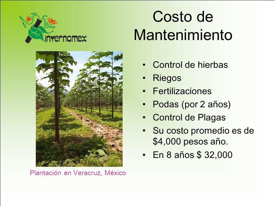 Costo de Mantenimiento Control de hierbas Riegos Fertilizaciones Podas (por 2 años) Control de Plagas Su costo promedio es de $4,000 pesos año. En 8 a