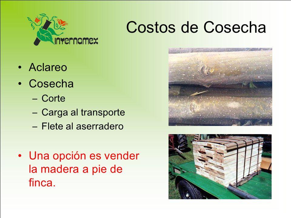 Costos de Cosecha Aclareo Cosecha –Corte –Carga al transporte –Flete al aserradero Una opción es vender la madera a pie de finca.