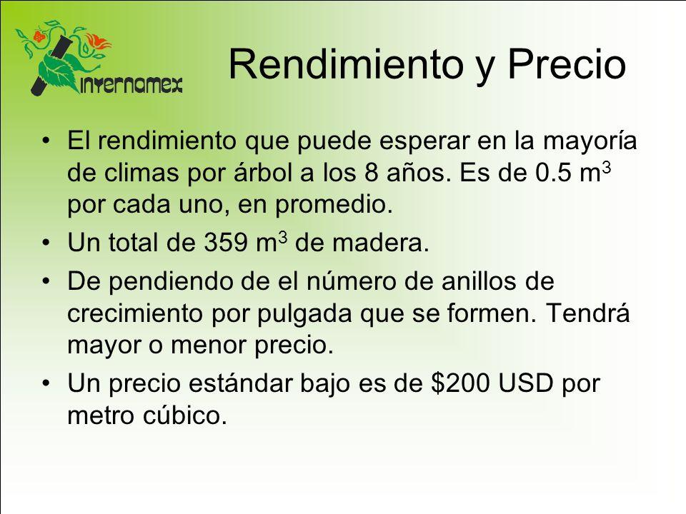 Rendimiento y Precio El rendimiento que puede esperar en la mayoría de climas por árbol a los 8 años. Es de 0.5 m 3 por cada uno, en promedio. Un tota