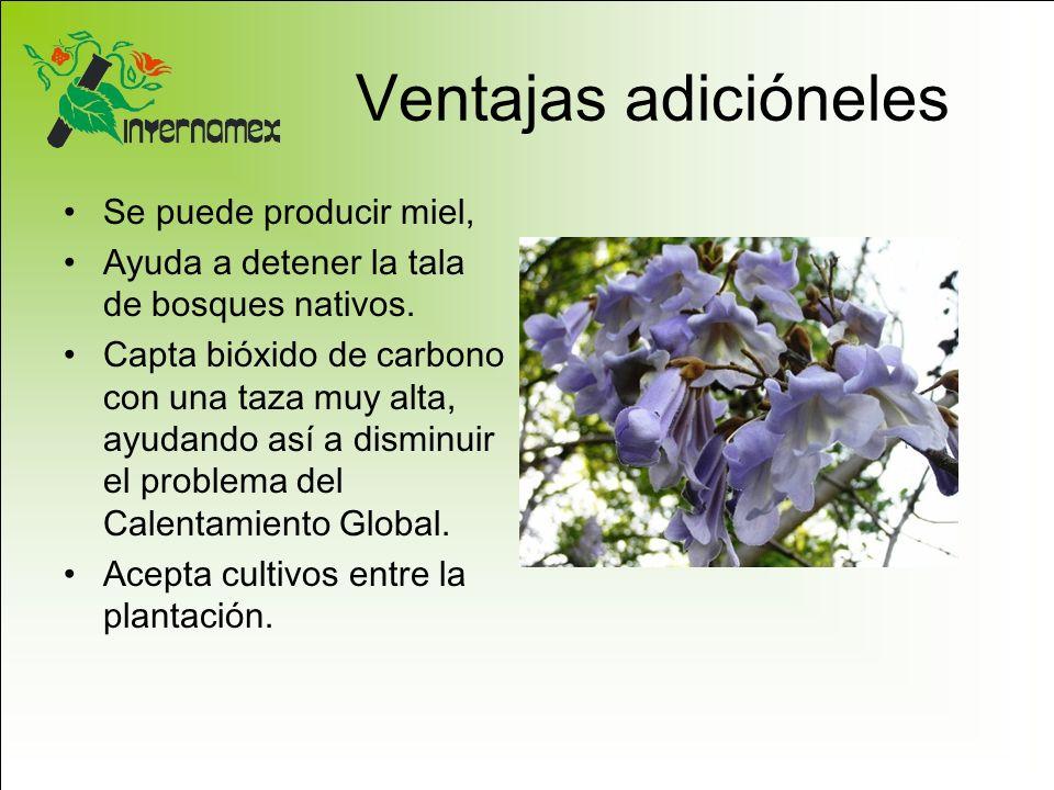Ventajas adicióneles Se puede producir miel, Ayuda a detener la tala de bosques nativos. Capta bióxido de carbono con una taza muy alta, ayudando así