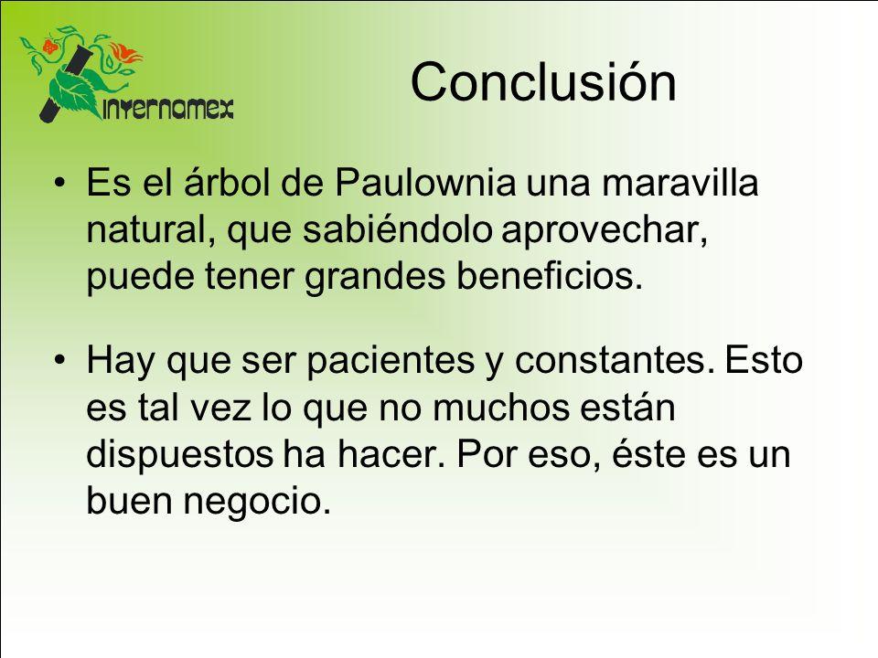 Conclusión Es el árbol de Paulownia una maravilla natural, que sabiéndolo aprovechar, puede tener grandes beneficios. Hay que ser pacientes y constant