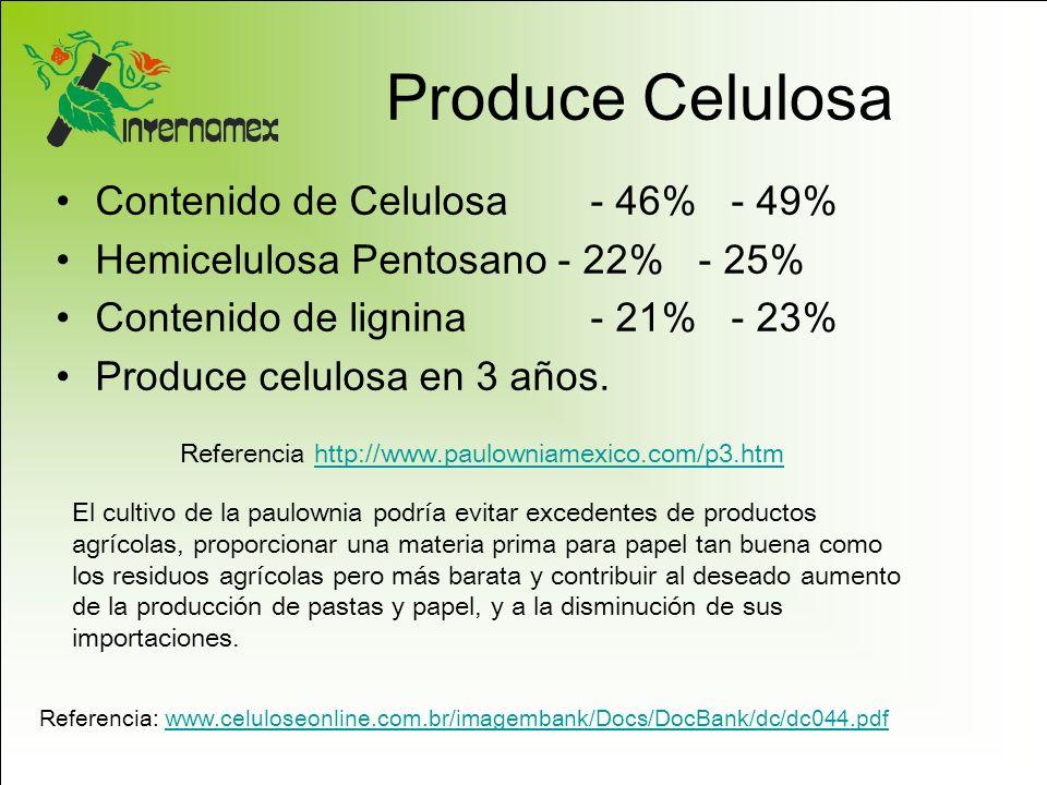 Produce Celulosa Contenido de Celulosa - 46% - 49% Hemicelulosa Pentosano - 22% - 25% Contenido de lignina - 21% - 23% Produce celulosa en 3 años. Ref