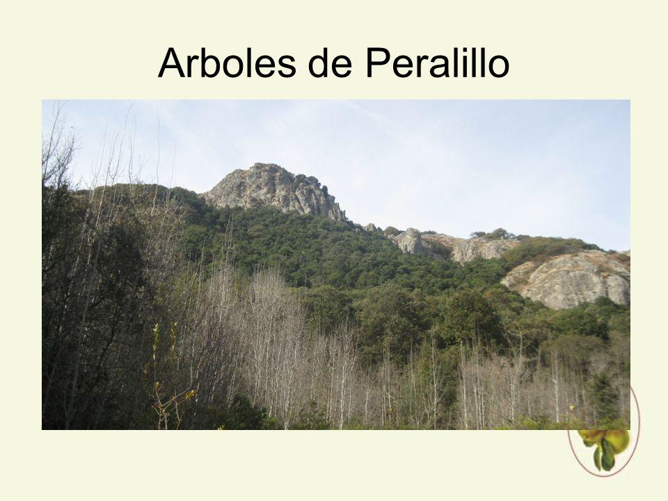 Arboles de Peralillo