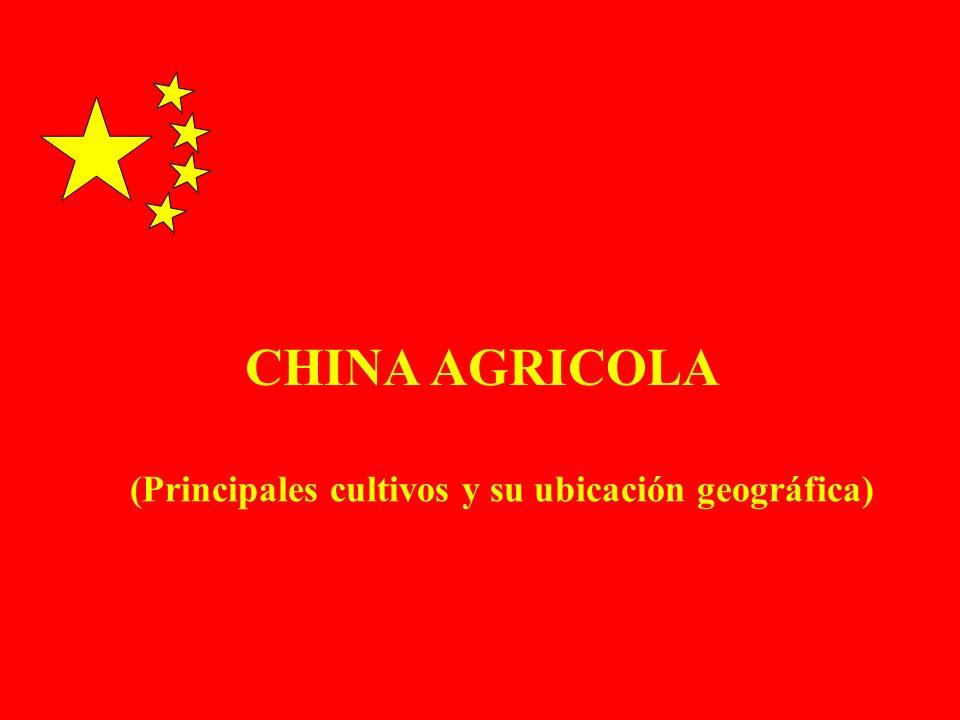 CHINA MAIZ