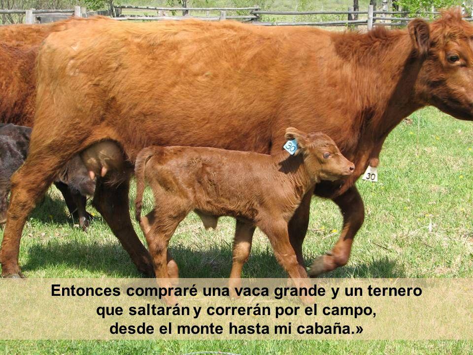 Entonces compraré una vaca grande y un ternero que saltarán y correrán por el campo, desde el monte hasta mi cabaña.»