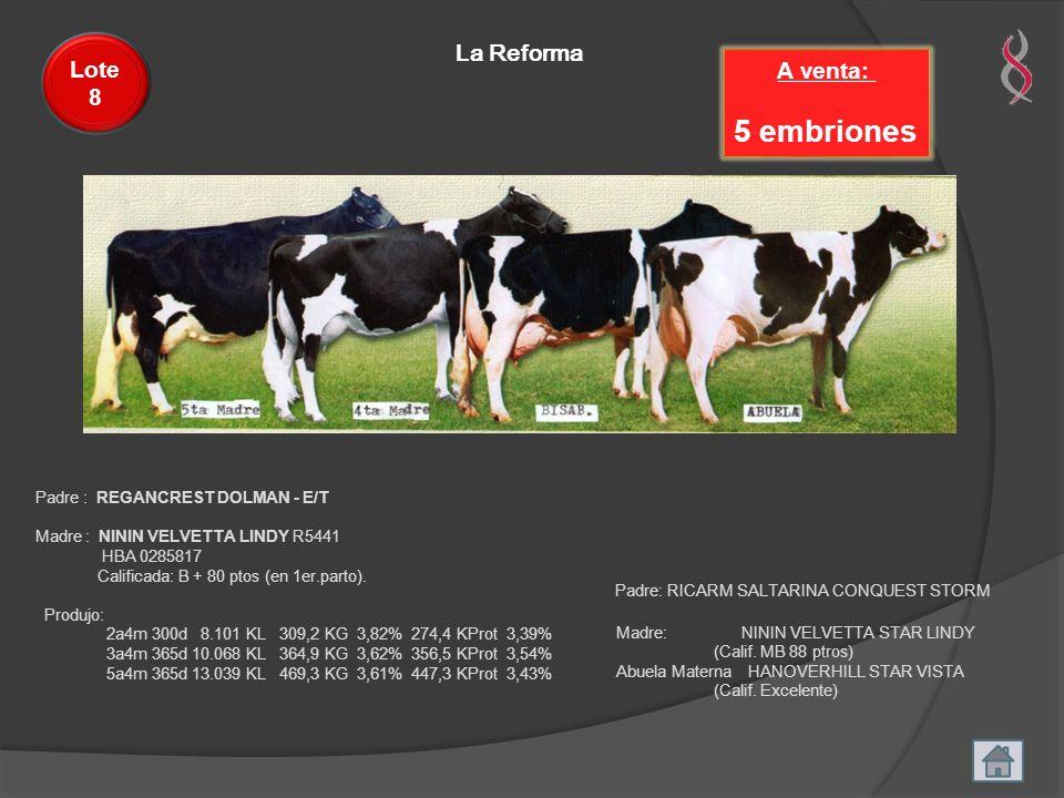 La Reforma A venta: 5 embriones Lote 8 Padre : REGANCREST DOLMAN - E/T Madre : NININ VELVETTA LINDY R5441 HBA 0285817 Calificada: B + 80 ptos (en 1er.