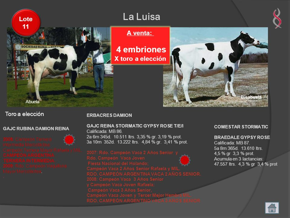 Abuela La Luisa A venta: 4 embriones X toro a elección Lote 11 GAJC RUBINA DAMION REINA 2008: Campeón Ternera Intermedia Mercoláctea; Campeón Ternera