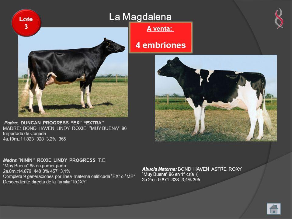 La Magdalena A venta: 4 embriones Lote 3 Padre: DUNCAN PROGRESS EX EXTRA MADRE: BOND HAVEN LINDY ROXIE MUY BUENA 86 Importada de Canadá 4a.10m.:11.823