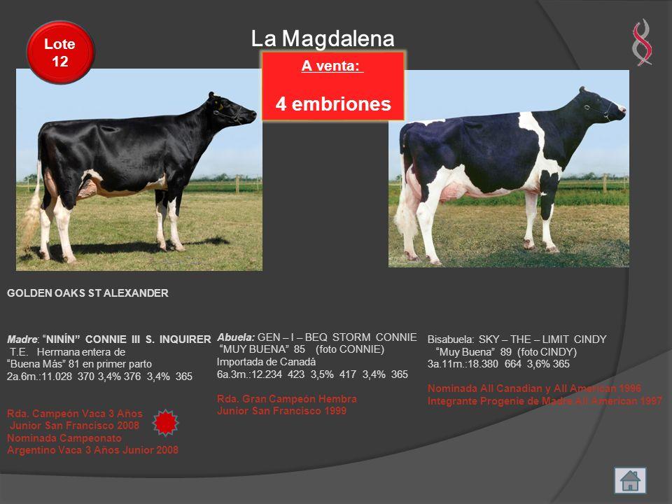 La Magdalena A venta: 4 embriones Lote 12 Madre: NINÍN CONNIE III S. INQUIRER T.E. Hermana entera de Buena Más 81 en primer parto 2a.6m.:11.028 370 3,