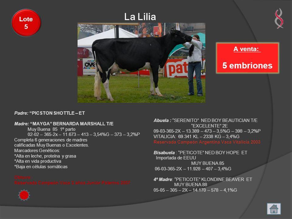 La Lilia A venta: 5 embriones Lote 5 Padre: PICSTON SHOTTLE – ET Madre: MAYGA BERNARDA MARSHALL T/E Muy Buena 85 1º parto 02-02 – 365-2x – 11.673 – 41