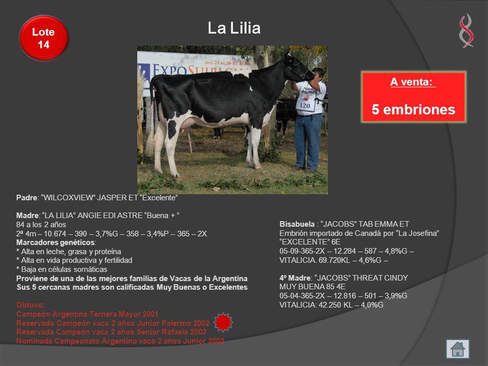 La Lilia A venta: 5 embriones Lote 14 Padre: WILCOXVIEW JASPER ET Excelente Madre: LA LILIA ANGIE EDI ASTRE Buena + 84 a los 2 años 2ª 4m – 10.674 – 3