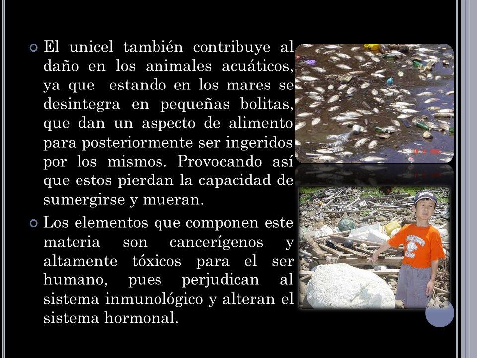 El unicel también contribuye al daño en los animales acuáticos, ya que estando en los mares se desintegra en pequeñas bolitas, que dan un aspecto de a
