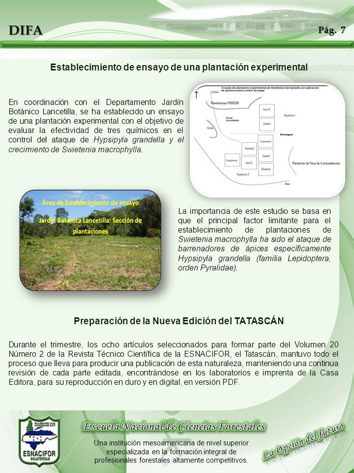 DIFA Establecimiento de ensayo de una plantación experimental En coordinación con el Departamento Jardín Botánico Lancetilla, se ha establecido un ens