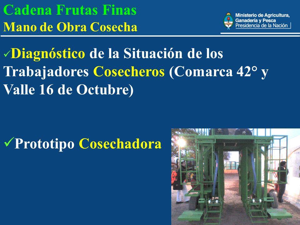 11 Cadena Frutas Finas Mano de Obra Cosecha Diagnóstico de la Situación de los Trabajadores Cosecheros (Comarca 42° y Valle 16 de Octubre) Prototipo C