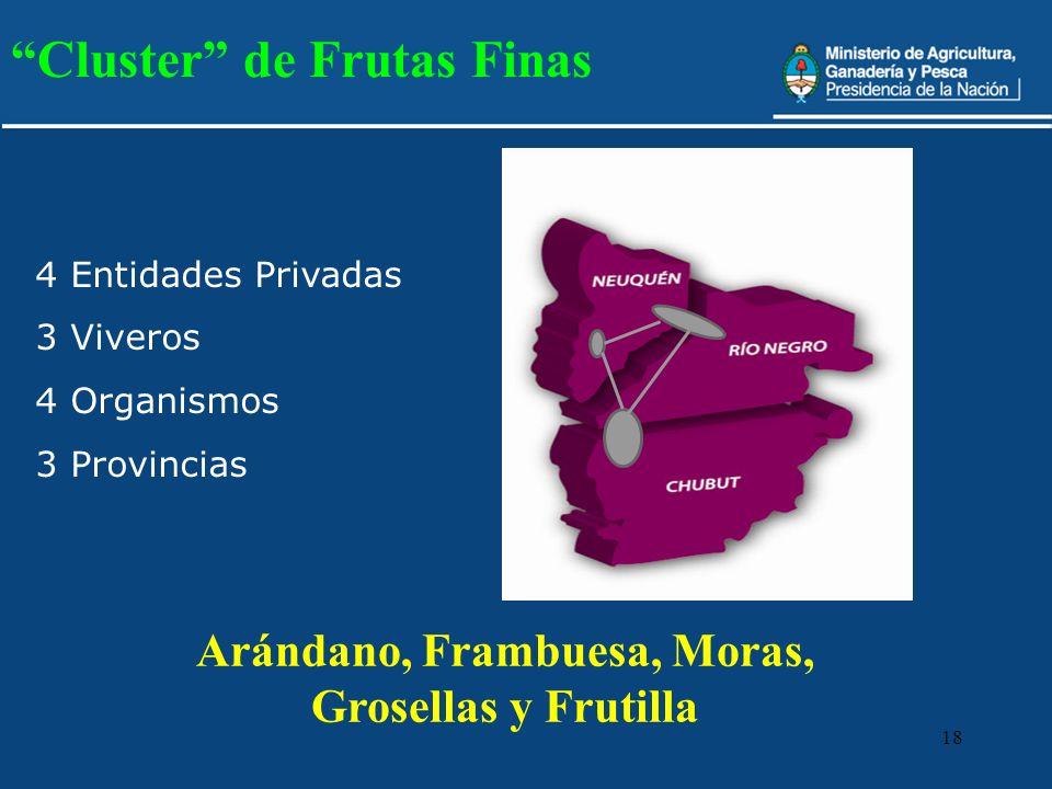 18 Arándano, Frambuesa, Moras, Grosellas y Frutilla Cluster de Frutas Finas 4 Entidades Privadas 3 Viveros 4 Organismos 3 Provincias