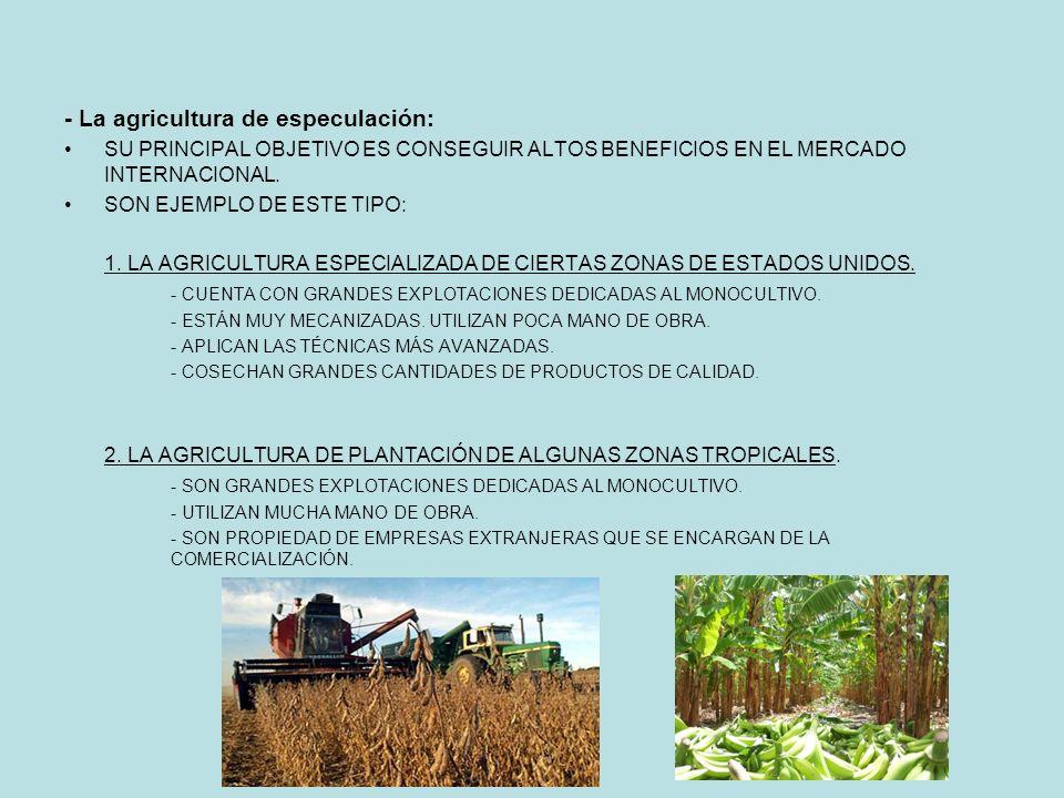 - La agricultura de especulación: SU PRINCIPAL OBJETIVO ES CONSEGUIR ALTOS BENEFICIOS EN EL MERCADO INTERNACIONAL.