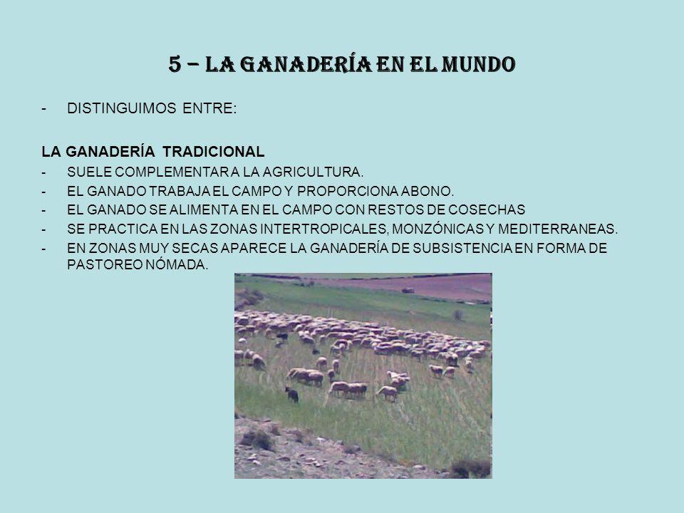 5 – la ganadería en el mundo -DISTINGUIMOS ENTRE: LA GANADERÍA TRADICIONAL -SUELE COMPLEMENTAR A LA AGRICULTURA.