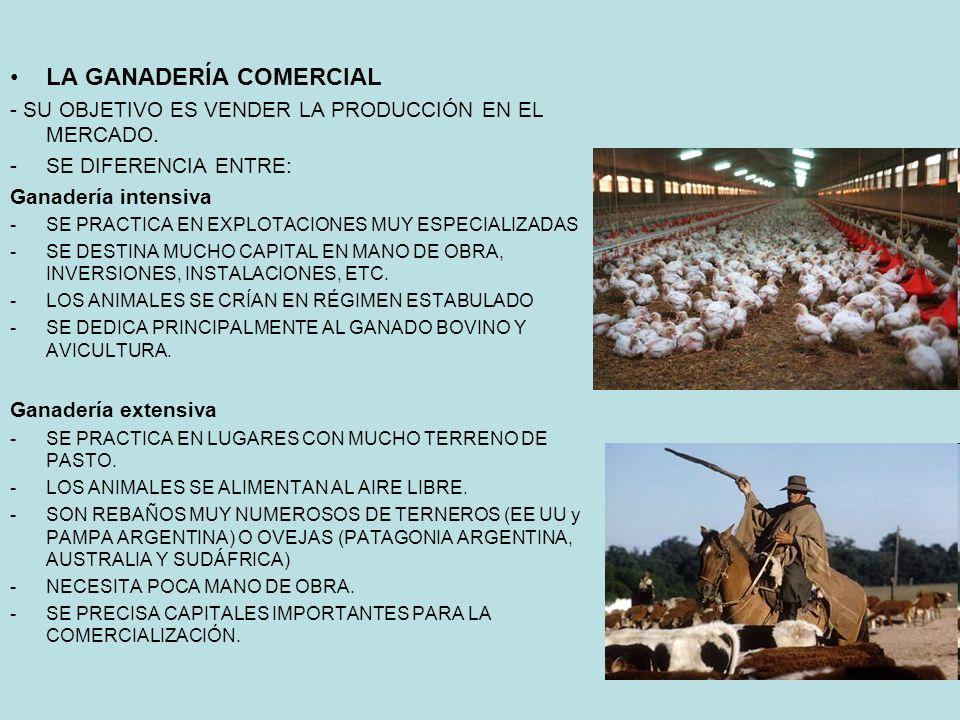 LA GANADERÍA COMERCIAL - SU OBJETIVO ES VENDER LA PRODUCCIÓN EN EL MERCADO.