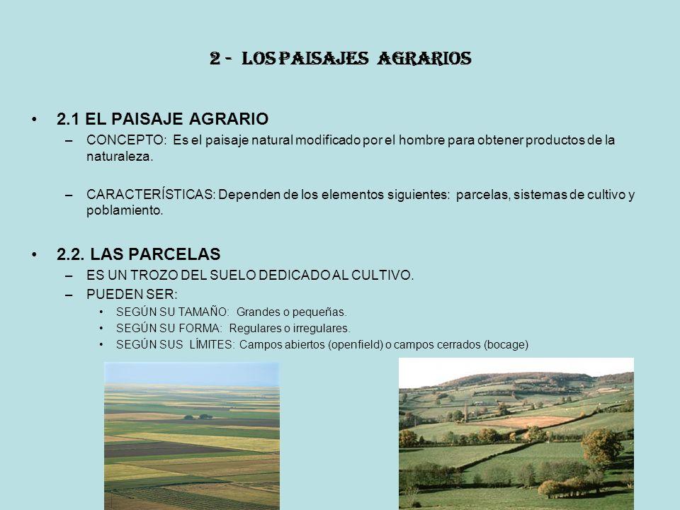 2 - LOS PAISAJES AGRARIOS 2.1 EL PAISAJE AGRARIO –CONCEPTO: Es el paisaje natural modificado por el hombre para obtener productos de la naturaleza.