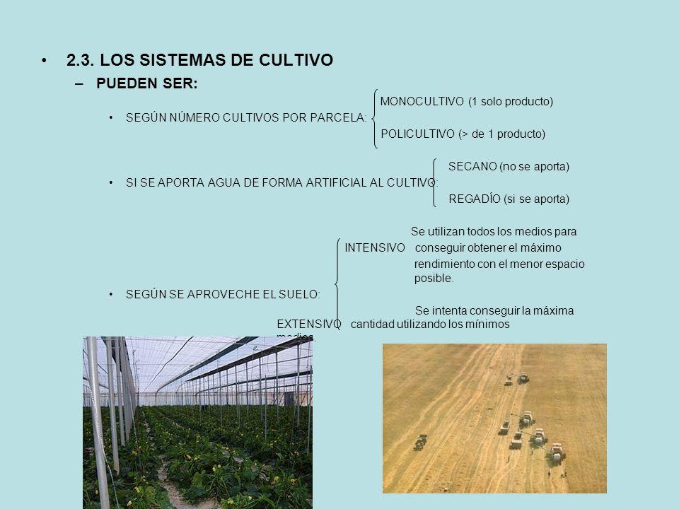 2.3. LOS SISTEMAS DE CULTIVO –PUEDEN SER: MONOCULTIVO (1 solo producto) SEGÚN NÚMERO CULTIVOS POR PARCELA: POLICULTIVO (> de 1 producto) SECANO (no se