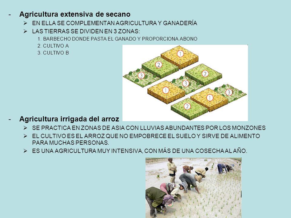 -Agricultura extensiva de secano EN ELLA SE COMPLEMENTAN AGRICULTURA Y GANADERÍA LAS TIERRAS SE DIVIDEN EN 3 ZONAS: 1.