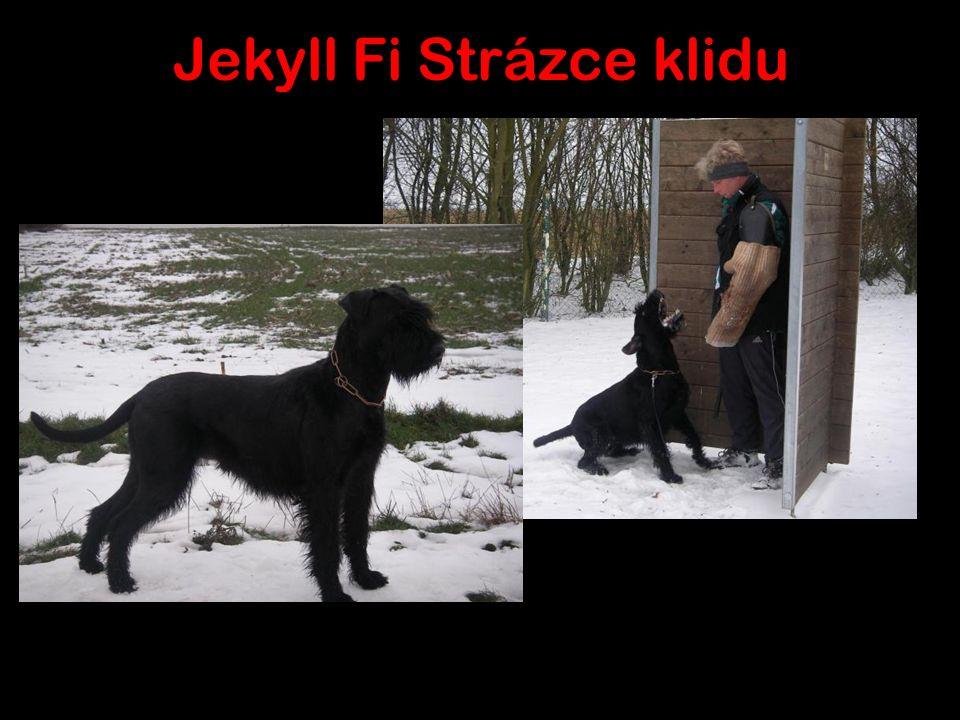 Jekyll Fi Strázce klidu http://www.working-dog.eu/dogs_details.php?id=92869&vid=&