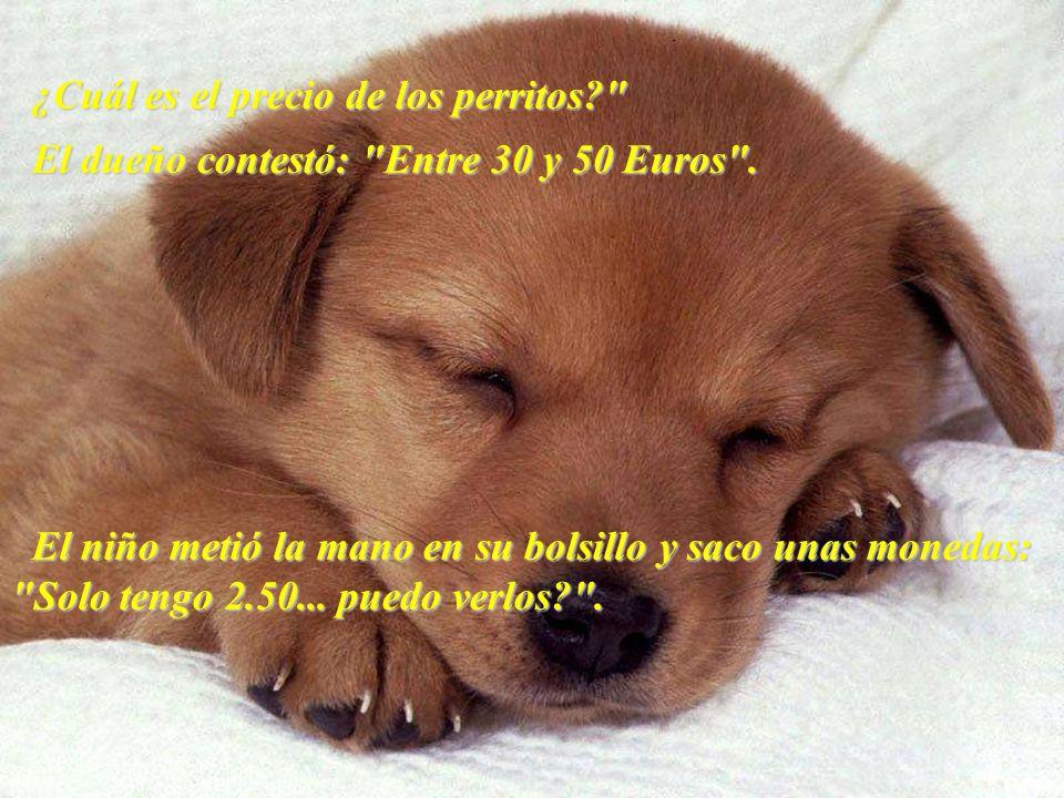 ¿Cuál es el precio de los perritos? El dueño contestó: Entre 30 y 50 Euros .