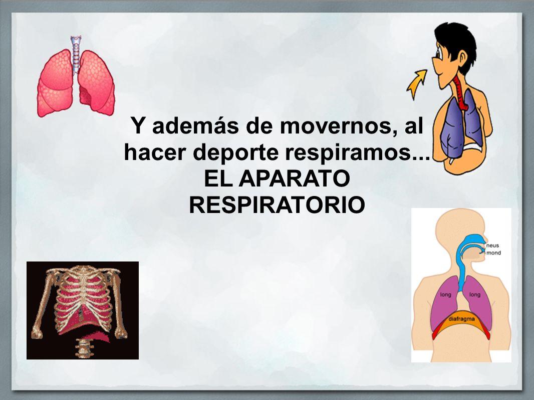 Y además de movernos, al hacer deporte respiramos... EL APARATO RESPIRATORIO