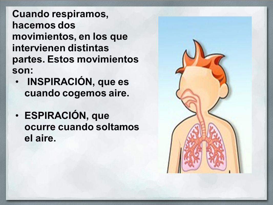 Cuando respiramos, hacemos dos movimientos, en los que intervienen distintas partes.